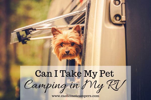 Can I Take My Pet Camping in My RV?